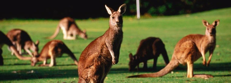 South Australia Zoo Tickets & Passes