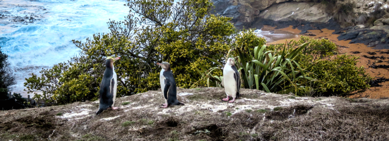 Top Dunedin & The Otago Peninsula Day Trips