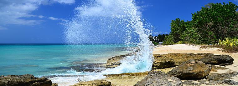Top St Croix Half-day Tours