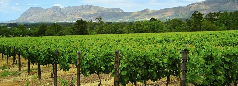Top Stellenbosch Food Tours