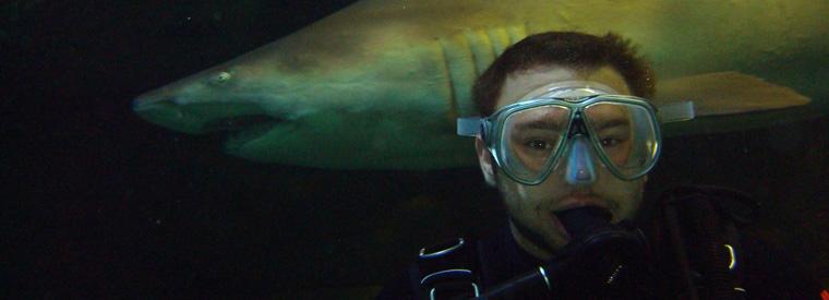Sydney Shark Diving