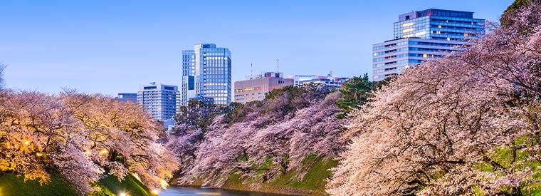 Top Tokyo Cruises, Sailing & Water Tours