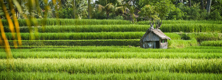 Top Ubud Walking Tours