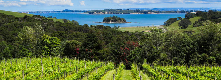 Top Waiheke Island Hop-on Hop-off Tours