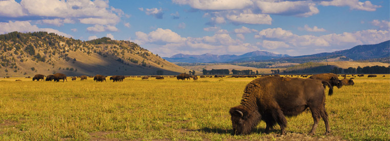 Top Wyoming Private Sightseeing Tours