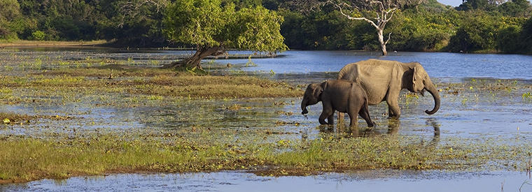 Yala National Park Airport & Ground Transfers