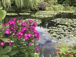 Monet's Waterlily pond , Pamela M - August 2017