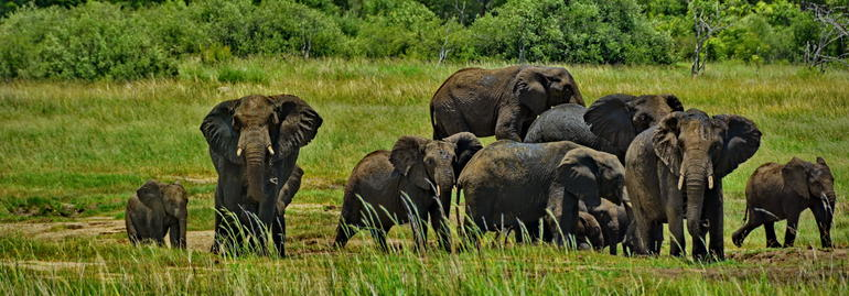 Full-Day Hwange National Park Tour from Victoria Falls