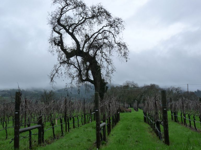 Loxton Vines - San Francisco