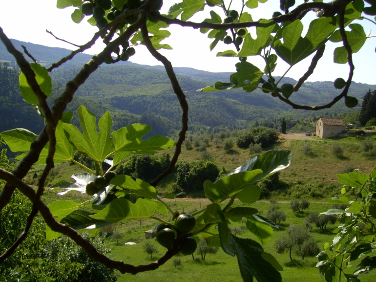 The view - Chianti Region - Florence