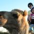 Photo of Ayers Rock Uluru Camel Express, Sunrise or Sunset Tours Uluru Camel Express, Ayers Rock