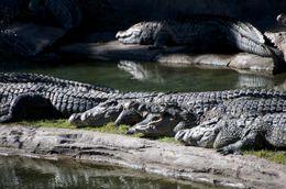 Crocs! - December 2009
