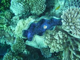 Giant clam , Hunter90 - July 2015