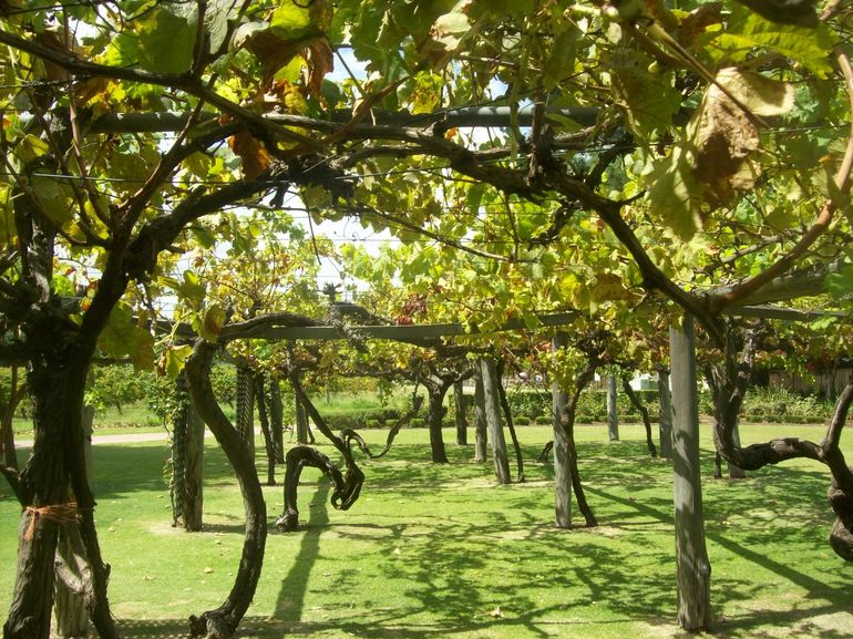 Swan Valley Gourmet Wine Cruise from Perth