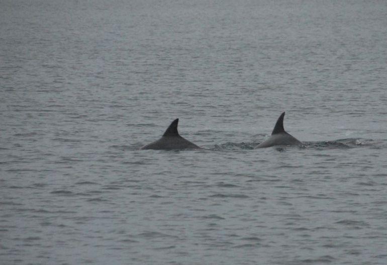 Jervis Bay Dolphin Cruise, Southern Coast - Sydney