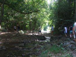 The rainforest walk on the way to Niau Falls - January 2010