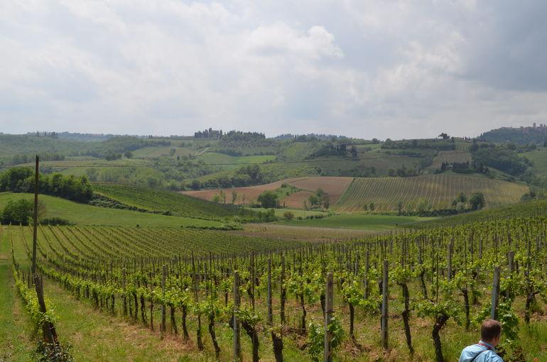 The Vineyard - Florence