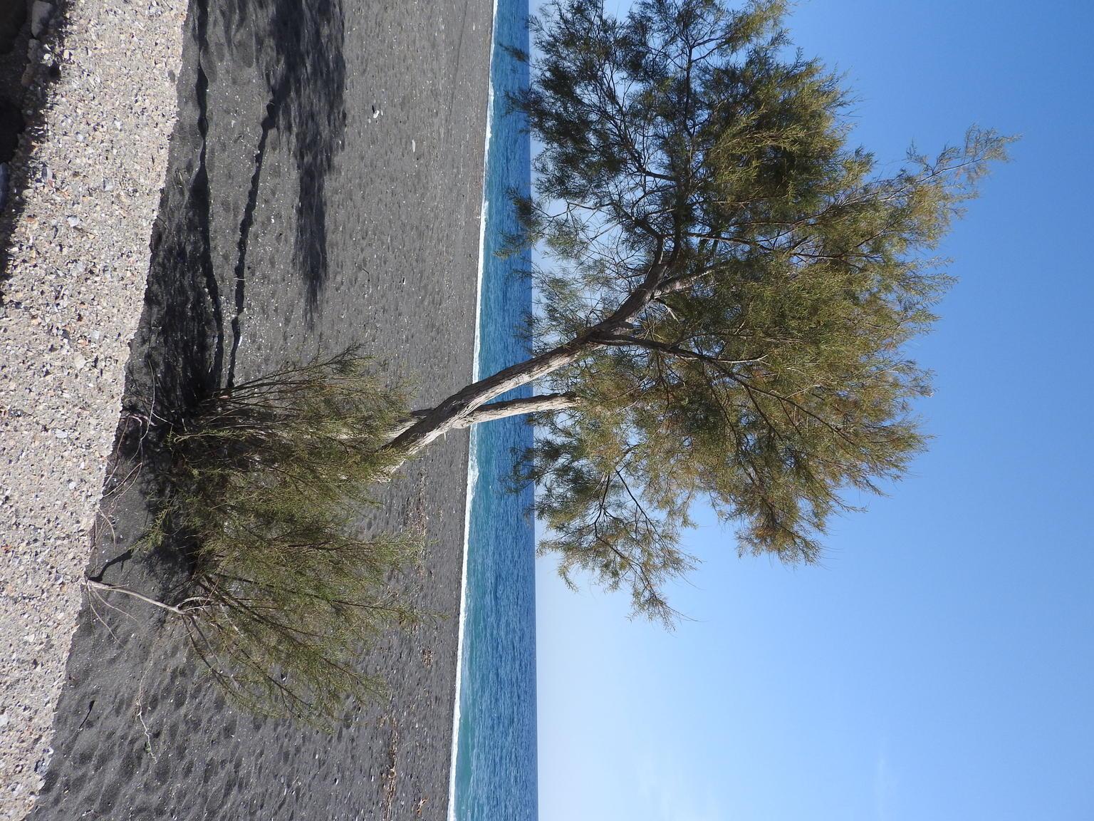 MÁS FOTOS, Recorrido privado personalizado: Santorini en un día
