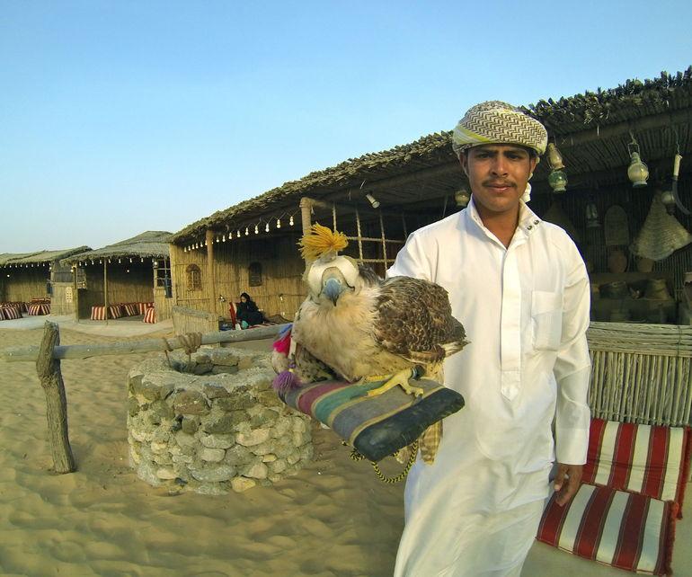 falcon trainer - Dubai