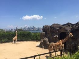 GIRAFE - ZOO DE TARONGA , ShérazKarim - October 2015