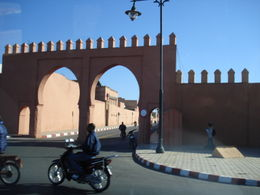 Leaving Marrakech, Cat - January 2012