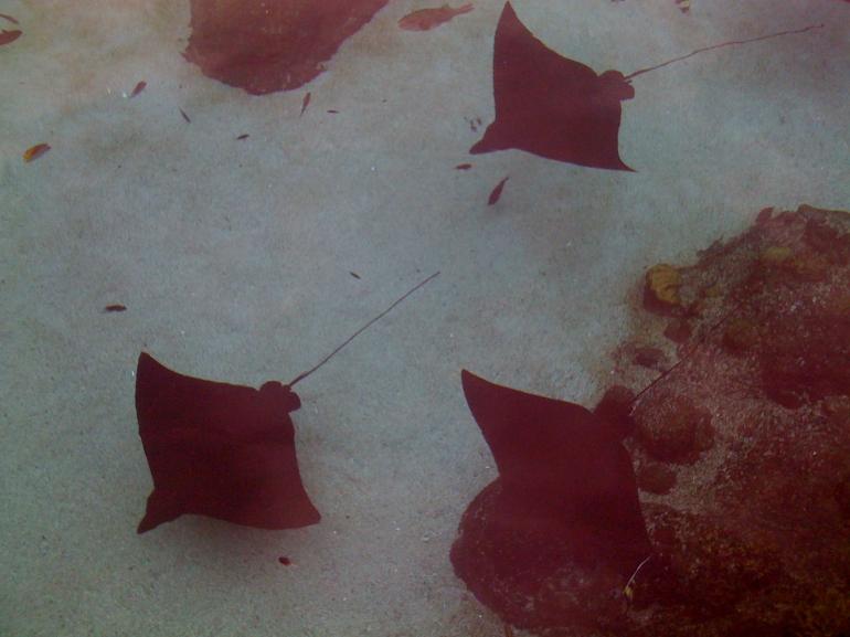 Sea world -