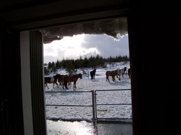 Nothing seemed to bother these delightful horses, Lisa K - March 2010