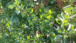 check out the vines! , Helen A - September 2015