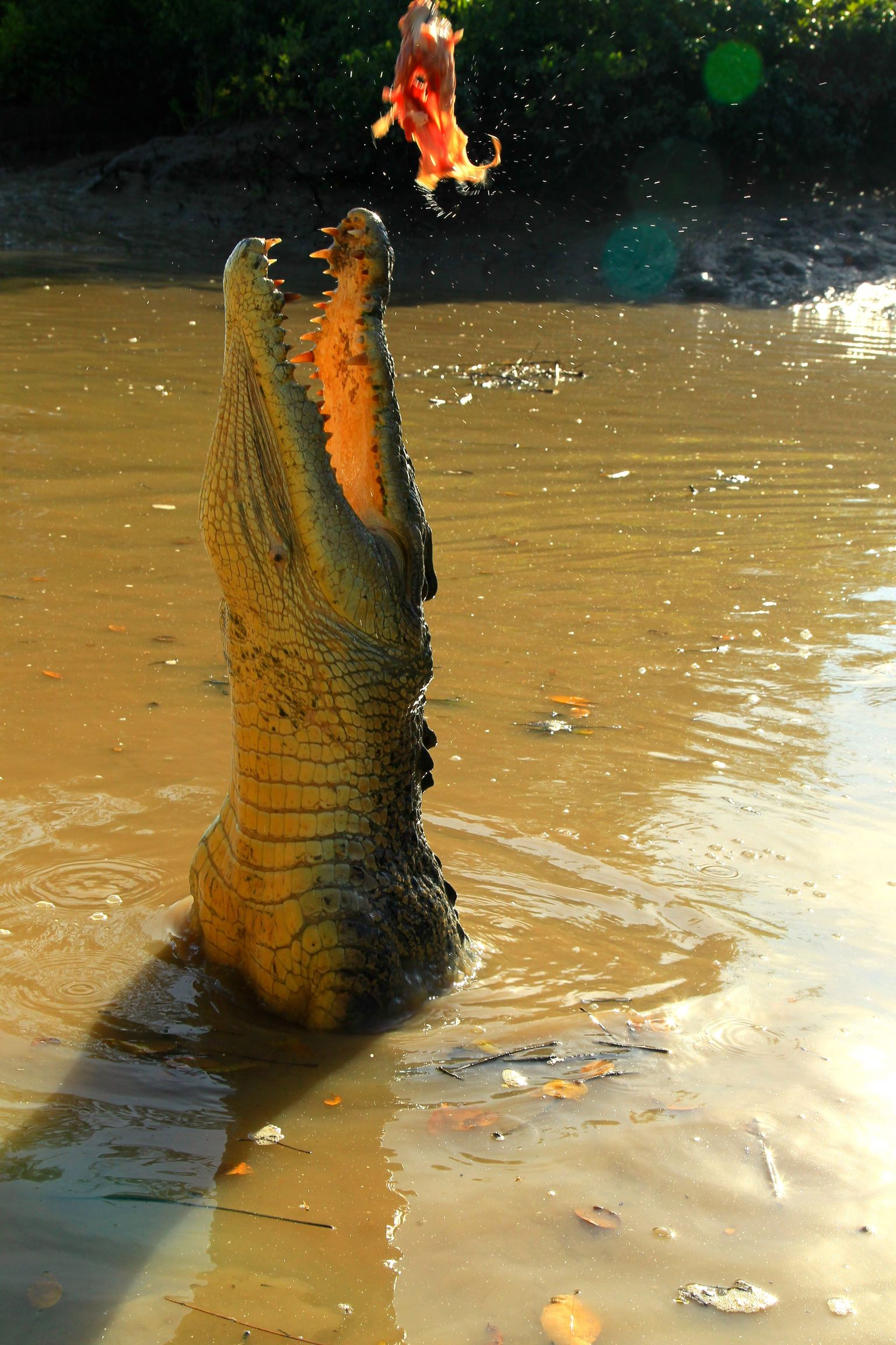 MÁS FOTOS, Litchfield and Jumping Crocodiles Full Day Trip from Darwin