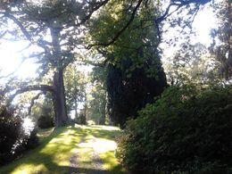 A tree , nirvair h - May 2014