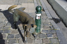 Zinneke Pis is a statue of a dog peeing. , Destini K - November 2012