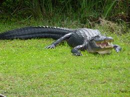Everglades national park , Danielle P - April 2014