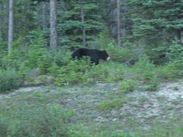The Black Bear , bill - August 2016