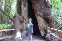 The foot of the tree was so many times bigger than my 8 year-old son., Ngiap Teck T - July 2009