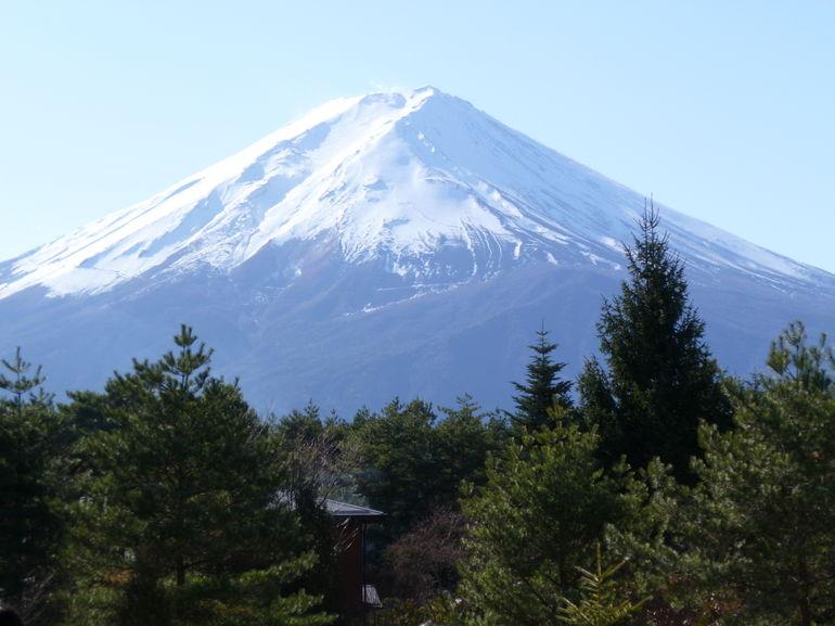 trees and Fuji - Tokyo