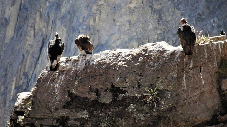 Full Day Trip to Colca Canyon from Arequipa