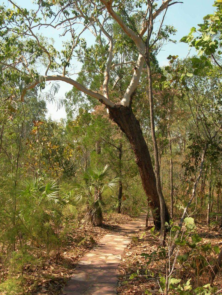Bush walk - Darwin