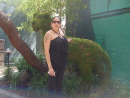 Spotted this lion at the Secret Garden in the Mirage, Michele Carbajal Curiel - May 2013
