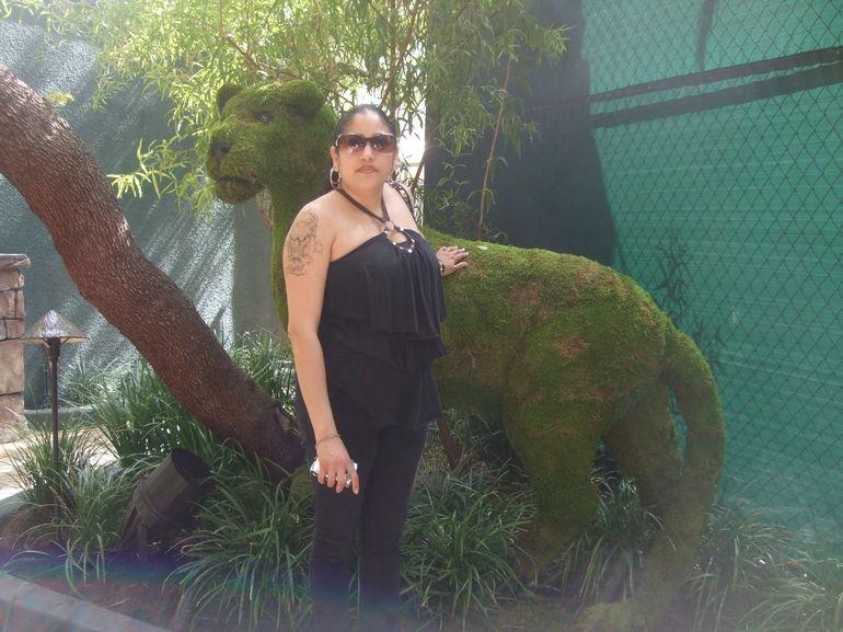 Found a Lion! - Las Vegas