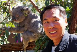 I'm in the koala pen for a close-up photo with a koala , Bill604 - October 2015