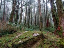 Alishan forest , Cynthia E - December 2016