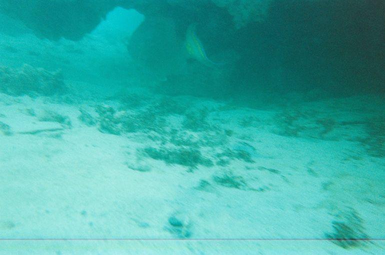 010_10 - Bermuda