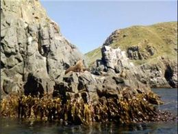 There were HUNDREDS of seals on these rocks., Therese B - February 2008