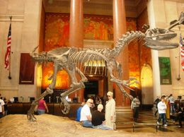 American Museum of Natural History, Omar R - October 2009