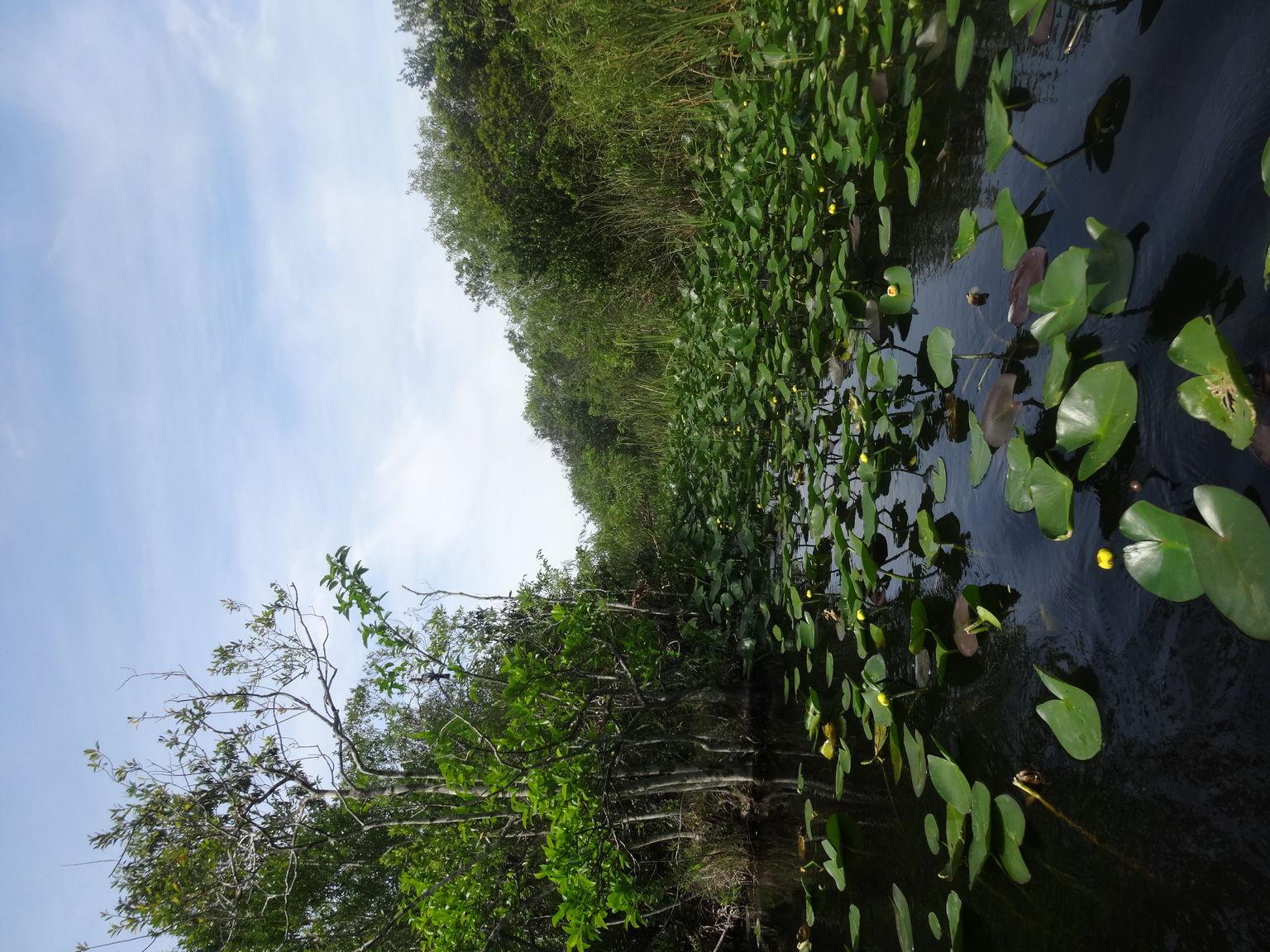 MAIS FOTOS, Aventura em aerobarco por Everglades, na Flórida, além de passeio de barco em Biscayne Bay, em Miami
