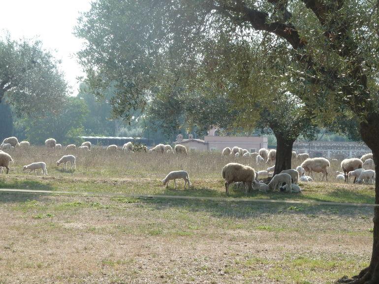 Appian Way Bike Tour. - Rome
