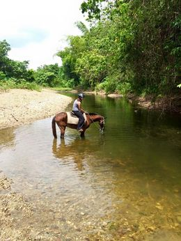 My horse needed to cool off in the River , Maria D - May 2015