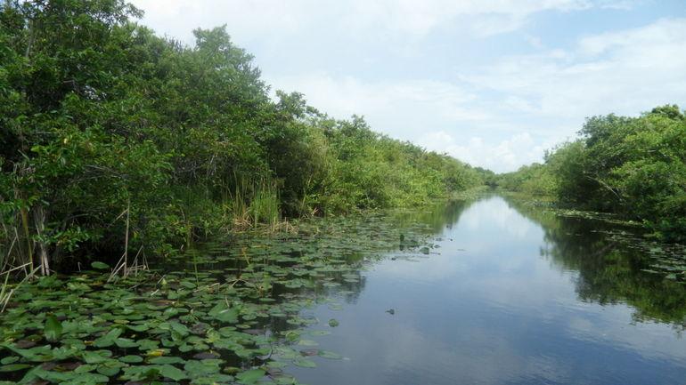 Everglades Boat - Miami