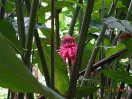 Spice-plantations , satish chandra - November 2014