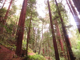 Redwood , Annabelle F - May 2015